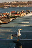Gaivota em Istambul imagem de stock royalty free