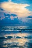 Gaivota em uma praia fotografia de stock