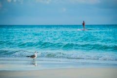 Gaivota em uma praia fotografia de stock royalty free