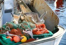A gaivota encontra peixes Fotos de Stock Royalty Free