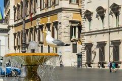 A gaivota está na fonte Fotografia de Stock