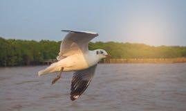 A gaivota está voando belamente com um bluesky fotos de stock