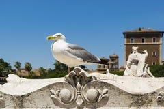Gaivota grande em Roma Fotos de Stock Royalty Free