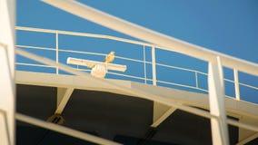 Gaivota na balaustrada branca de um navio foto de stock