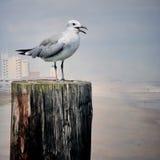 Gaivota na praia de Carolina imagem de stock royalty free