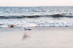 Gaivota na praia do oceano Fotos de Stock