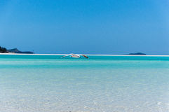 Gaivota na praia II de Whitehaven Fotografia de Stock Royalty Free