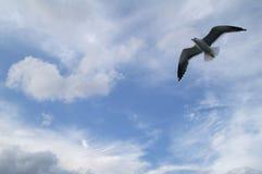 A gaivota no céu imagem de stock