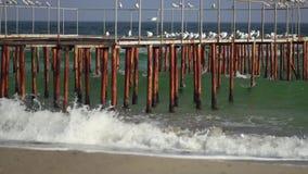 Gaivota no cais do ferro no mar filme