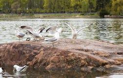 Gaivota no lago Fotografia de Stock