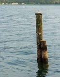 Gaivota no lago Iseo fotografia de stock