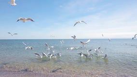 Gaivota no litoral, alimentando as gaivotas na costa, seascape vídeos de arquivo