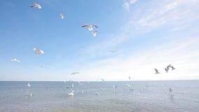 Gaivota no litoral, alimentando as gaivotas na costa, seascape video estoque