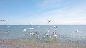 Gaivota no litoral, alimentando as gaivotas na costa, seascape filme