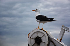 Gaivota no navio Fotos de Stock Royalty Free