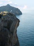 Gaivota no pico da montagem com seascape bonito Imagem de Stock Royalty Free