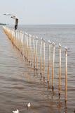 A gaivota no polo Fotografia de Stock Royalty Free