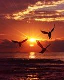 Gaivota no por do sol Foto de Stock Royalty Free