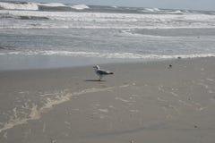 A gaivota olha no oceano Fotografia de Stock Royalty Free