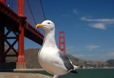 Gaivota pela ponte de porta dourada Imagens de Stock