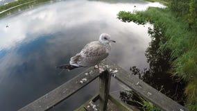 Gaivota que está no trilho que voa afastado sobre o movimento lento da água da lagoa filme