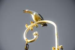 Gaivota que grita em um poste de luz branco perto do mar Fotos de Stock Royalty Free