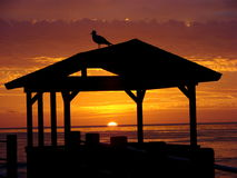 Gaivota que olha o por do sol em La Jolla Imagem de Stock