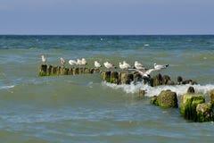 Gaivota que sentam-se no quebra-mar Fotos de Stock