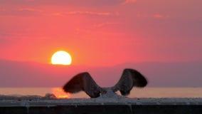 Gaivota que voa afastado Cena do mar no por do sol vídeos de arquivo