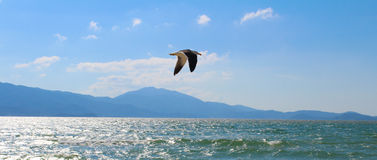Gaivota que voa pacificamente na praia Fotografia de Stock Royalty Free