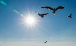 Gaivota que voam no céu fotografia de stock