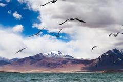 Gaivota que voam sobre DangQiongCuo Foto de Stock