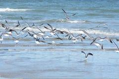 A gaivota reune todos os movimentos no mesmo sentido com um aviso geral fotos de stock