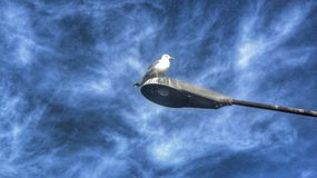 A gaivota só imagem de stock royalty free