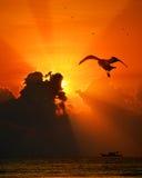 A gaivota só Foto de Stock Royalty Free
