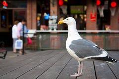 Gaivota só que senta-se na frente do restaurante Imagem de Stock Royalty Free