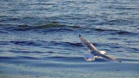 A gaivota sobe no céu que sae atrás de espirrar ondas Movimento lento filme