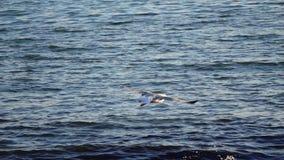 A gaivota sobe no céu que sae atrás de espirrar ondas Movimento lento vídeos de arquivo