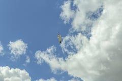 Gaivota sobre no céu Foto de Stock