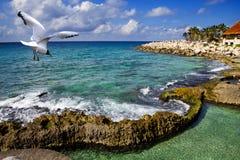 Gaivota sobre o mar no parque perto de Cozumel, México Fotografia de Stock Royalty Free