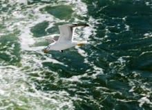 Gaivota sobre o oceano fotografia de stock