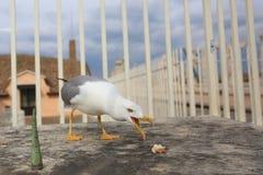 Gaivota sobre o San Pietro Dome, Cidade Estado do Vaticano Imagens de Stock Royalty Free