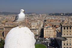 Gaivota sobre Roma, Itália imagem de stock