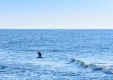A gaivota voa fora da costa do Mar Negro fotos de stock
