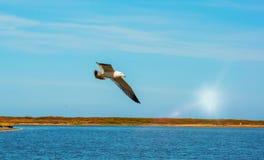 Gaivotas brancas de voo altas do céu azul que pairam sobre o mar Um dia ensolarado Imagens de Stock Royalty Free