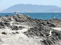 Gaivotas Cabo Frio Fotografia de Stock