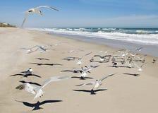 Gaivotas com cena do oceano Foto de Stock