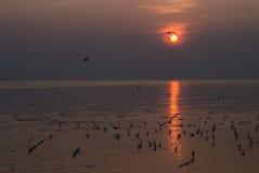 Gaivotas com por do sol Fotos de Stock Royalty Free