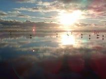 Gaivotas do por do sol Fotografia de Stock Royalty Free