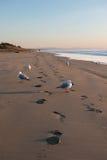 Gaivotas e pegadas na praia abandonada Foto de Stock Royalty Free